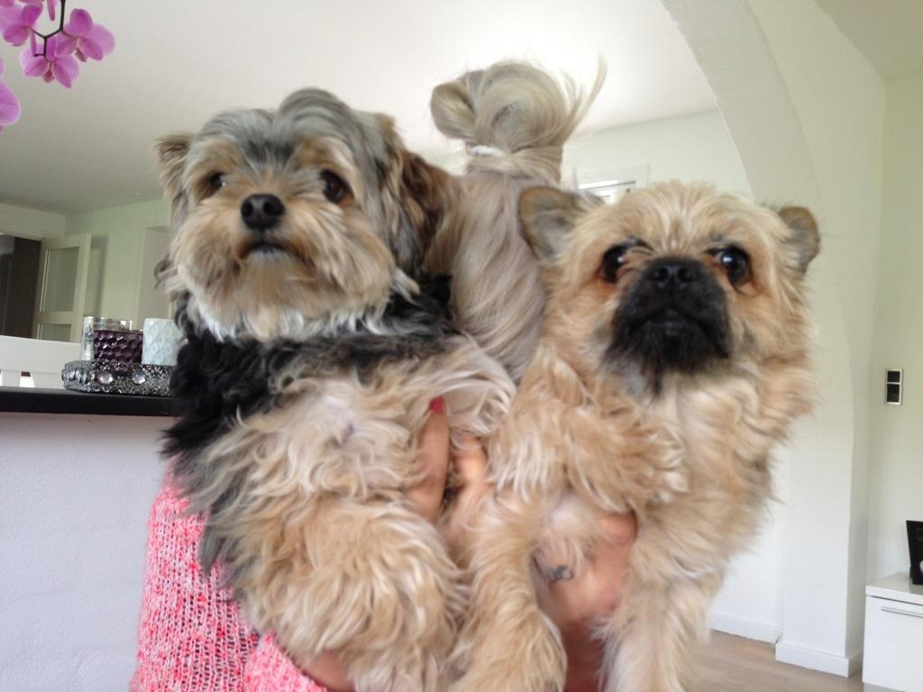 Hunde frisør